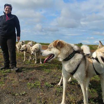 Coi cani da slitta in Islanda