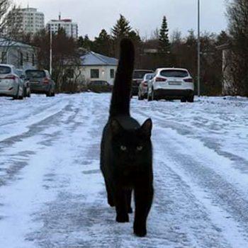 Gatti di Reykjavík